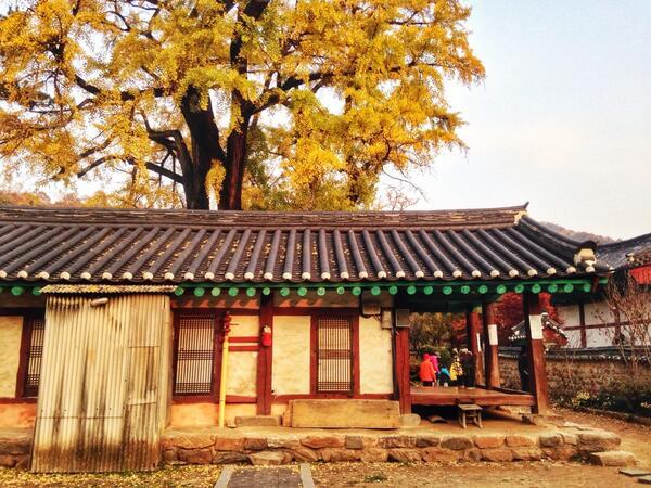 #전주향교 #dicadong   막바지 가을 즐기기 http://t.co/NU8Jy8jTwI