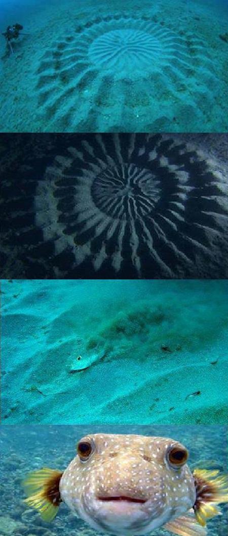 El pez artista, el pez que crea obras de arte en el mar http://t.co/BWSnBaHthN