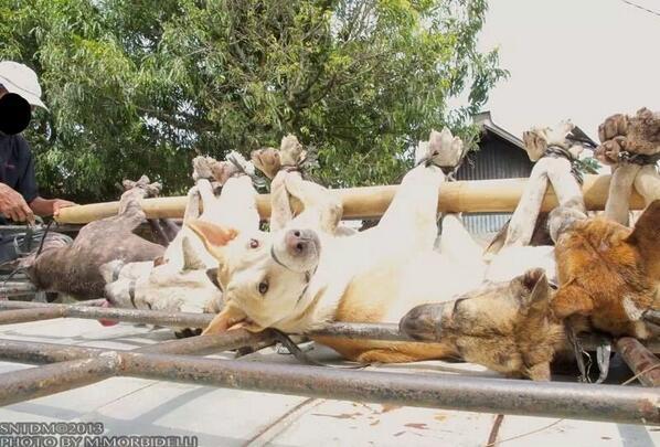 인도넹시아: 개고기 문화는 어디가도 잔인합니다. 개고기 먹는 사람들은 동물학대에 동참. RT  @mstoysav: INDONESIA SHITHOLE OF HUMANITY http://t.co/Rc4HDPssqf