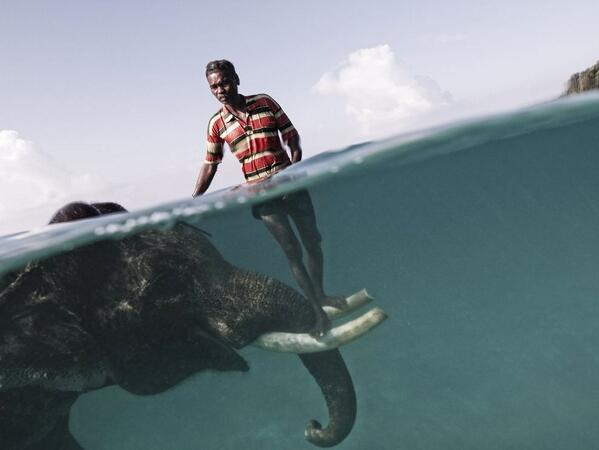 Swimming with Elephants by Cesare Naldi http://t.co/aYD8e6dorS