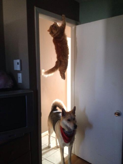 """Anyone see a cat run past here?"" - the dog http://t.co/uhgr4mY2nu"