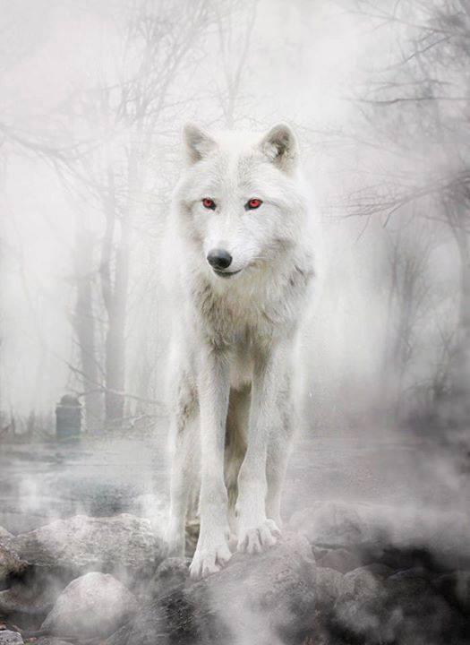 RT @JonSnowBastrd: Best direwolf ever #Ghost @GameOfThrones.... http://t.co/1ufFQO528i