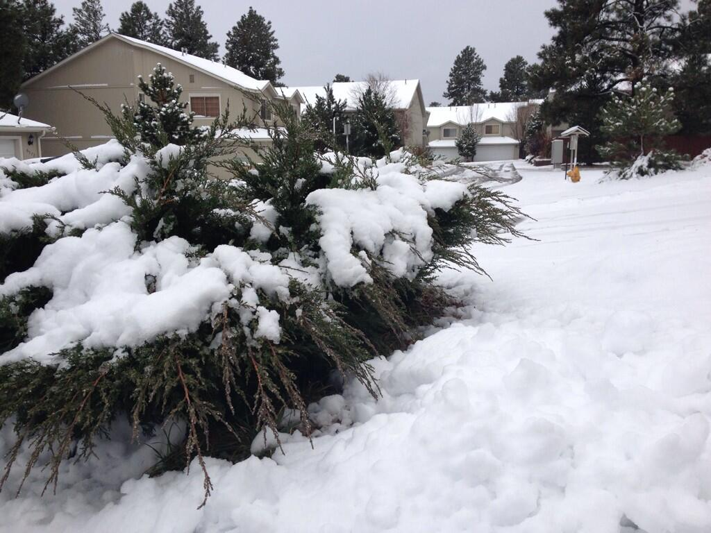 RT @12NewsKrystle: Snow adding up fast in #Flagstaff #azwx @12News http://t.co/BKlH1mtDIV