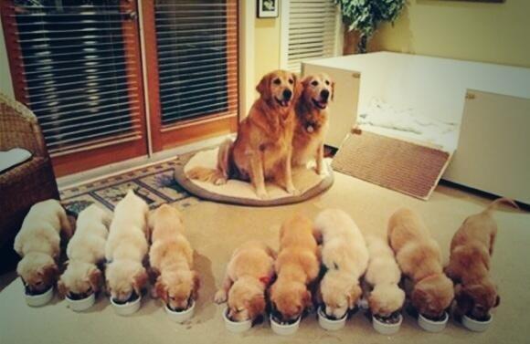 【 可愛かったらRT♪ 】 子な家族が欲しい!! http://t.co/3jzLtDXCuR