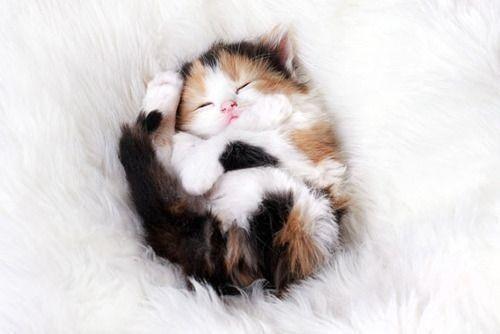 【 可愛かったらRT♪ 】 気持ち良く寝てます(( _ _ ))..zzzZZ http://t.co/LwE0Vr2Srm