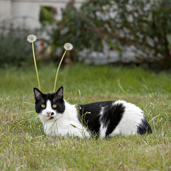#Caturday: My Favorite Martian. http://t.co/tcjBwrsmqf