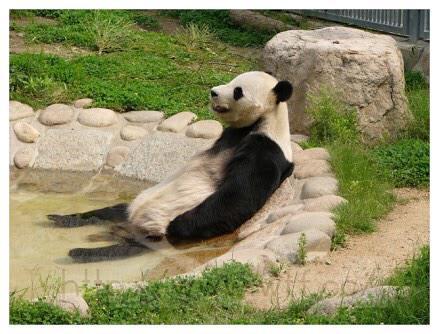 """これいいですねー """"@6jigen: クマ科の動物は、みんなこうやって休むのか。リラックマ…。 http://t.co/Nx3BjumoRJ"""""""