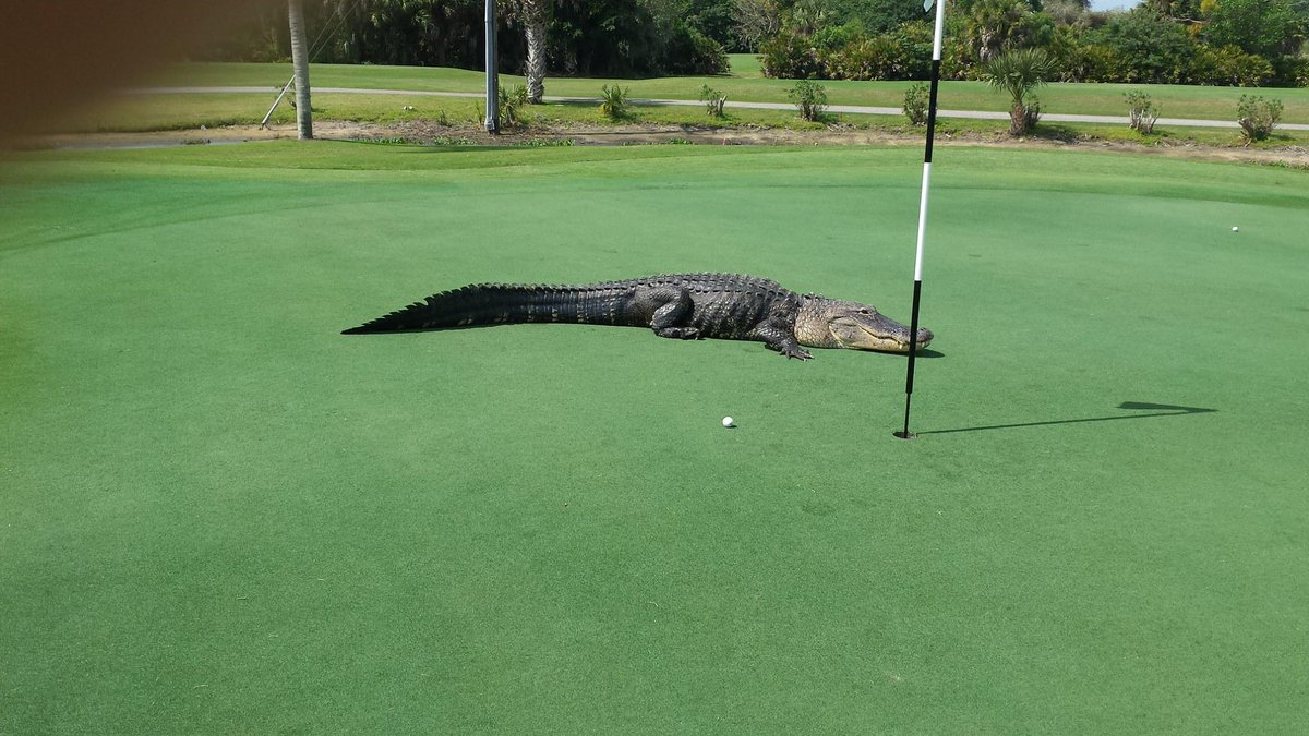 @GatorZoneAlbert @GZAlberta I see you like to golf http://t.co/RvT4EarVoG