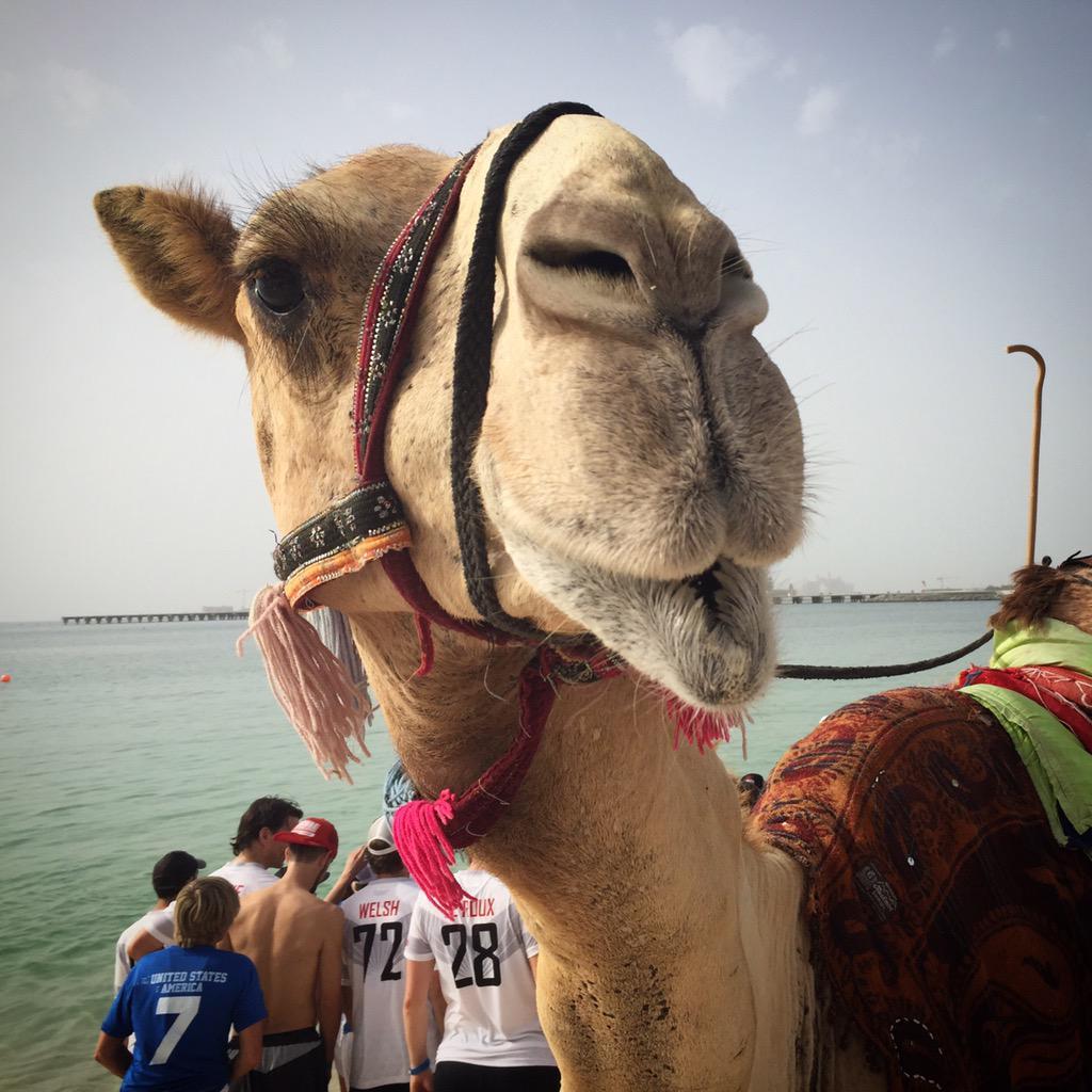 Camel kisses. #WCBU2015 #mxm #usa http://t.co/ZnYEKvWq1J <a href='http://twitter.com/usaumxmDubai/status/575935613708316673/photo/1' target='_blank'>See original »</a>