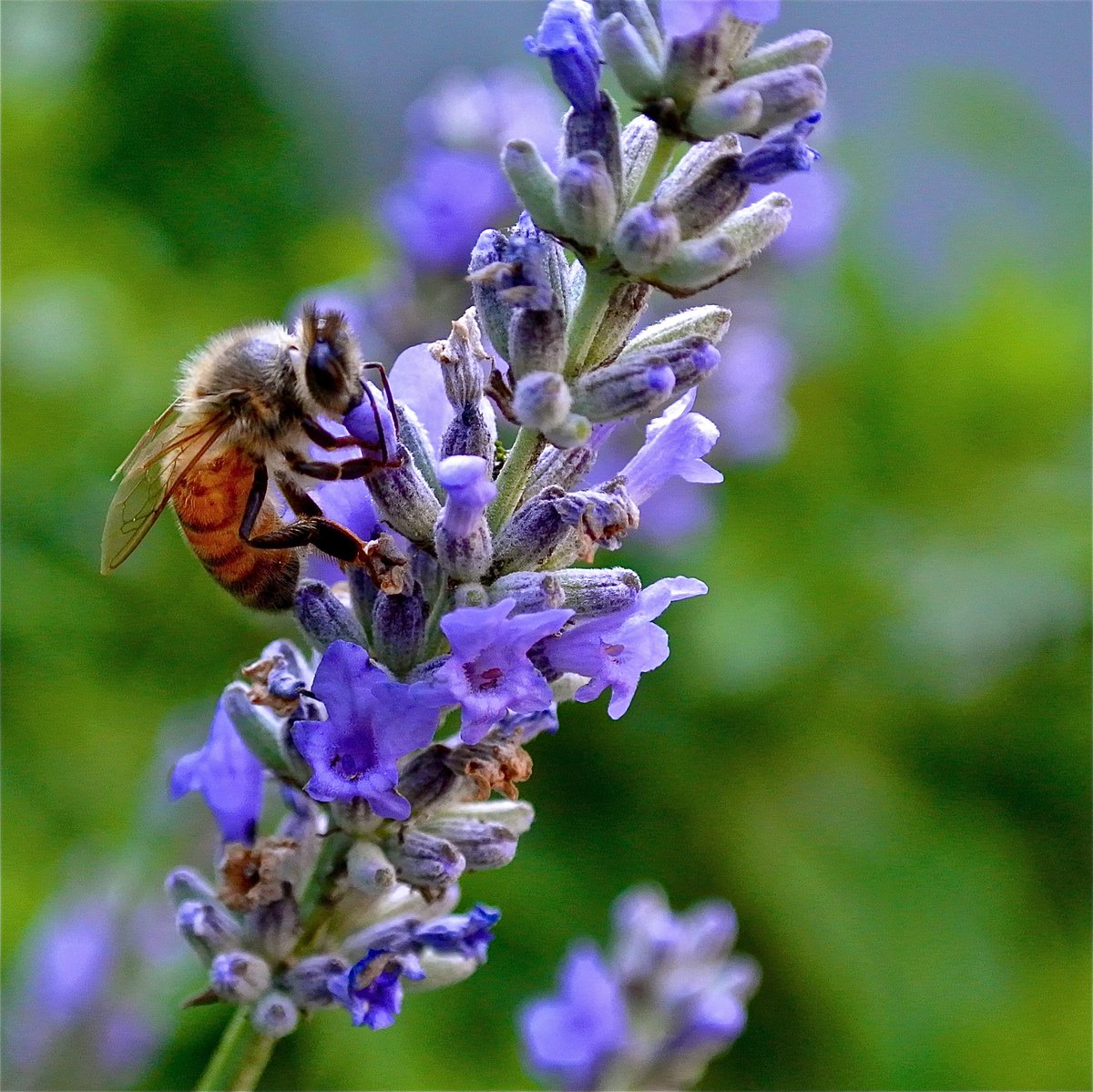 """""""Handle a book as a bee does a flower, extract its sweetness but do not damage it.""""  ~ John Muir #quote http://t.co/AzN31wZG8l"""