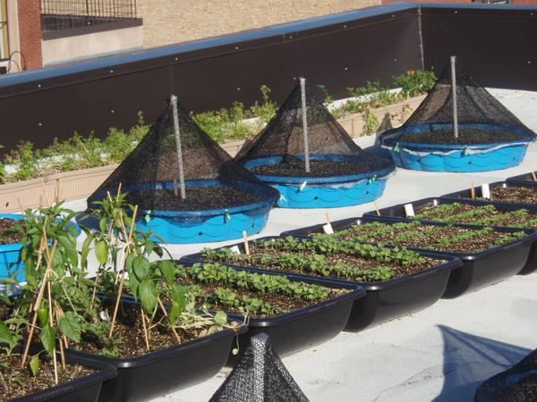 #AHmoestuintjes kunnen het dak op.. Mooie stimulans voor #stadslandbouw.. @stadsnatuur @JPLongayroux @DeNatuurschuur http://t.co/AqIMp2V5rd
