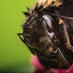 Macro #Photography Explained: We Get Up Close And Personal http://t.co/BNWbKkCfbq http://t.co/6hMBxY1v0l #photographershour