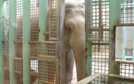 @FreeTonyTiger @lucyliberte ;( GRRRRR!!!!! ►►@CityofEdmonton LET LUCY GO TO AN #ELEPHANT SANCTUARY!! THIS IS CRUEL!! http://t.co/Vc6SOEqVAs