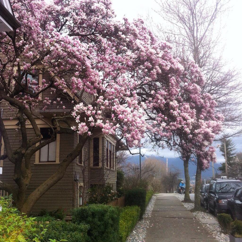 Those who say that Canada doesn't experience a proper spring have clearly never been to Vancouver. #exploreBC http://t.co/yEwYPK82B4