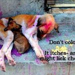 RT @ExactlyThat: Please, please don't colour them this Holi. http://t.co/BFkOPf2FUa