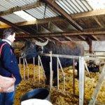 D66 Boertour bij @DeStoerderij #D66Brabant http://t.co/c9EHnHdNIJ