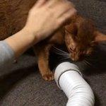【新着ブログ】シャンプー後の猫の乾燥には、布団乾燥機を使うと便利 http://t.co/UVMf9VZXxr http://t.co/O52N9HddEY