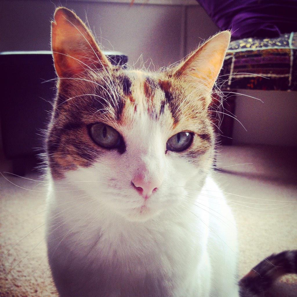 My cat has gone walkabouts. Last seen yest morn. Anyone in Shawlands area seen her?