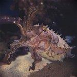 Im at Monterey Bay Aquarium - @montereyaq in Monterey, CA https://t.co/DCRcf3ZXCG http://t.co/QNlvLBbO1J
