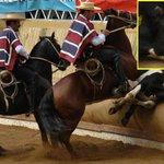Quien disfruta del Rodeo, disfruta de la tortura. (Cuidado) #ChileSinRodeos @inti_illimani http://t.co/DqYbIu7omB