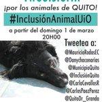 Hoy 8PM tweeteada masiva para que los #animales sean sujetos de derechos en #Quito! #InclusiónAnimalUIO #Ecuador http://t.co/kNGENxnMBW