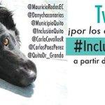 Hoy 8PM tweeteada masiva para que los #animales sean sujetos de derechos en #Quito! #InclusiónAnimalUIO #Ecuador http://t.co/cml7mxGWYj