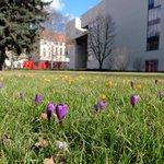 #Krokusy na scenie wiosennej  @TeatrCapitol #wroclaw http://t.co/K0T5r0myef