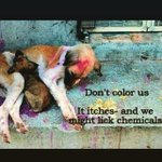 RT @ThorTheSuperdog: Pls don't colour strays this #Holi. Don't throw water balloons on them. It hurts them and is unsafe. Pls RT. http://t.…