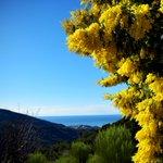 E svegliarsi così, con la #Liguritudine, anche se è lunedì! Buongiorno #Liguria! #Expo2015 #Vallebona #Italy http://t.co/z2JcWXtwC5
