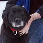 Cachorra cega é resgatada após ficar 2 semanas perdida no frio no Alasca http://t.co/ZQTEEEFEfl #G1 http://t.co/IAU4f0K2lO