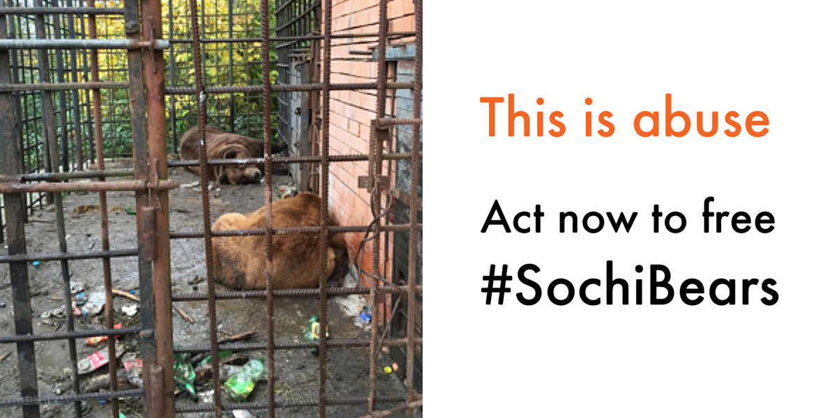 Please retweet: SIGN and SHARE the petition to free #SochiBears: http://t.co/OZuDpP3WQX http://t.co/fTkUKCRrKE
