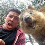 クアッカワラビーと一緒に自画撮りするのが今オーストラリアで流行ってるらしい http://t.co/1vFnflCvqT http://t.co/dcKwbPc9uK