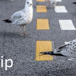 Unete al grupo de Linkedin de Galicia Business Leadership http://t.co/6oBOMrgCoQ… http://t.co/S8mCAkOlh8 http://t.co/YnbWXepydJ