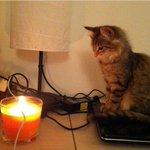 """""""Кот сидел так мило, решил сфоткать. Только потом я понял, что он наблюдал как горит шнур моего зарядного устройства"""" http://t.co/3w8bzPODVV"""