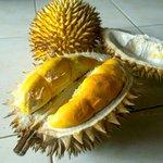 Kencono Rukmi, Primadona durian asli #Gunungkidul. Warnany keemasan.Rndah kadar alkohol & kolesterol. http://t.co/oZOjrWhFlw -@iqbal_kautsar