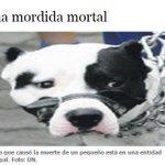 Otro niño murió en #Quito por mordida de pitbull. Se está aplicando ordenanza 048?http://t.co/vW8Mfv2Xr5 #QuitoVigila http://t.co/f0nvEx5ows