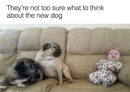 They're not too sure what to think about the new dog...