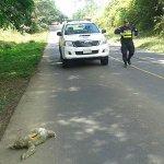 Fuerza Pública rescata otra osa perezosa en la zona norte http://t.co/fA0nYf8C9o http://t.co/LfIbNtVYWs