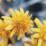 Hoy en la mañana fui al bosque a tomar algunas fotos con diferentes lentes que pronto las verán en mi Instagram 🌿🌳🍂🌼 http://t.co/VgDVRdYbTL