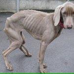 Pour chaque RT @pedigreeUS fait don dun bol de croquettes à ces chiens affamés, RT ça prend 2 secs ????#TweetForBowls http://t.co/MkBjhC956b