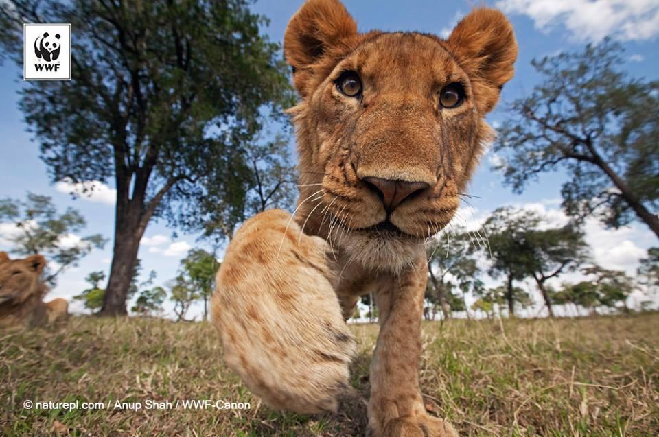 【今日の一枚】3月3日は「世界野生生物の日」です! http://t.co/GiznT0yvbO