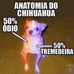 anatomia do chihuahua https://t.co/SEFbRvqf7Z