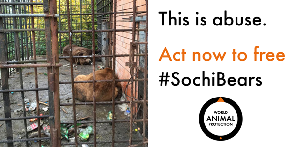 No animal deserves this. RT if you agree and take action to free #SochiBears: http://t.co/JXxG8RljSJ http://t.co/lRESKrlY9k