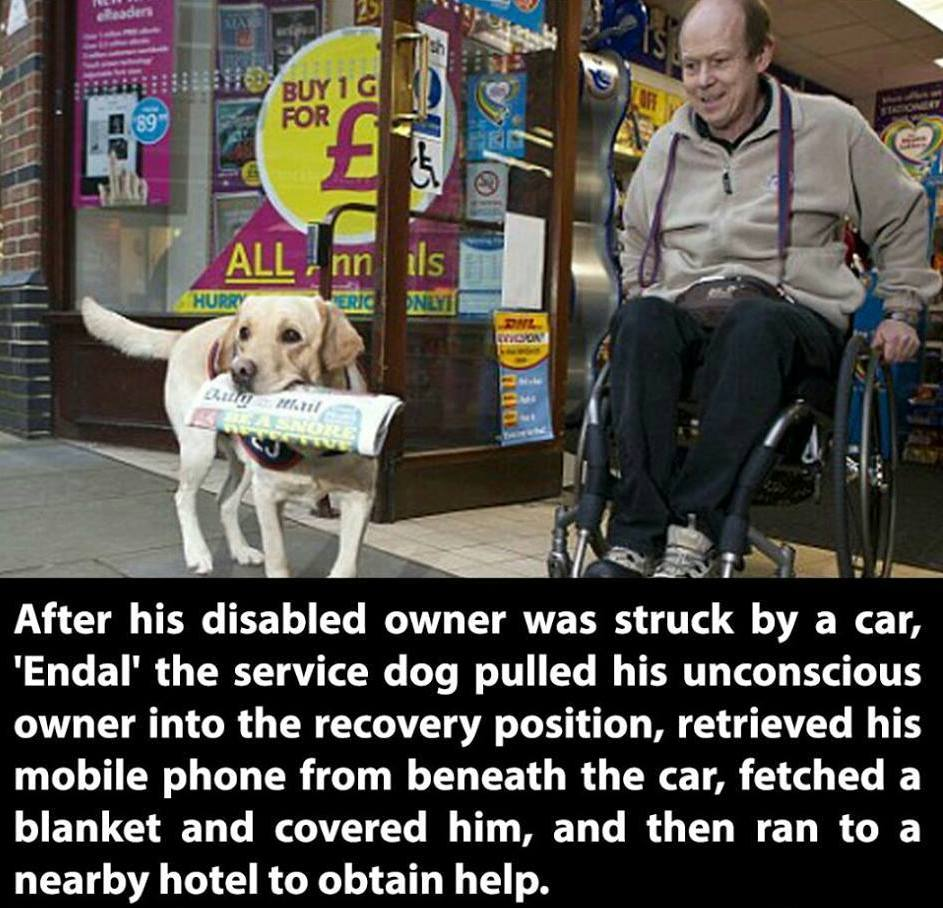 This is why I love dogs: http://t.co/5VmcuzIJGF