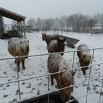 Dont forget about your pets and livestock as wind chills dip below zero overnight! #MTwx #IDwx http://t.co/9CMzobPWAV