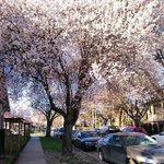early spring in #Vancouver, #BC #Canada http://t.co/HCDQLO7elt http://t.co/zTKZVUreIY