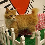 SOS>pledge>rescue CATS-or will kill>6pm 3/3 w/heartstick-no sedation-#Floyd-#GA http://t.co/zWpWcl8Onl-#GivingTuesday http://t.co/x1btE7Iw6g