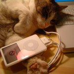 Rhapsody in Mew: The music scientifically composed for kitties http://t.co/q7GrLX8BJL http://t.co/GMrPYevK2M