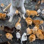 Ilha japonesa tem população de gatos 6 vezes maior do que a de humanos http://t.co/HNLlcQD1tw #G1 http://t.co/W6AjbkgvnF