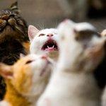 Ilha japonesa tem população de gatos 6 vezes maior do que a de humanos http://t.co/HNLlcQUCl4 #G1 http://t.co/53p9l0YVY4